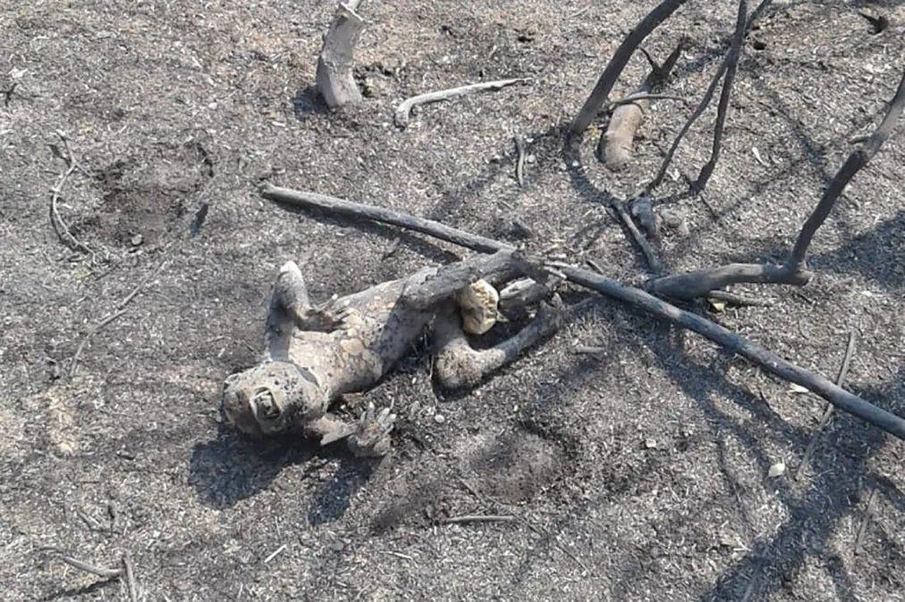 Murieron todos los animales de un parque natural que se quemó en Corrientes