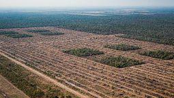 En Santa Fe, entre 2013 y 2018 se desmontaron de forma ilegal las hectáreas equivalentes a seis canchas de fútbol por día. En Chaco, esa cifra sube hasta 120 canchas por día, mientras que en Santiago del Estero sube hasta 221.