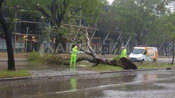 La tormenta dejó calles anegadas y árboles caídos