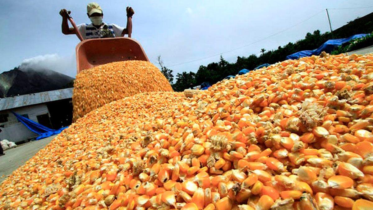 El Gobierno cerró exportaciones de maíz para priorizar al mercado interno.