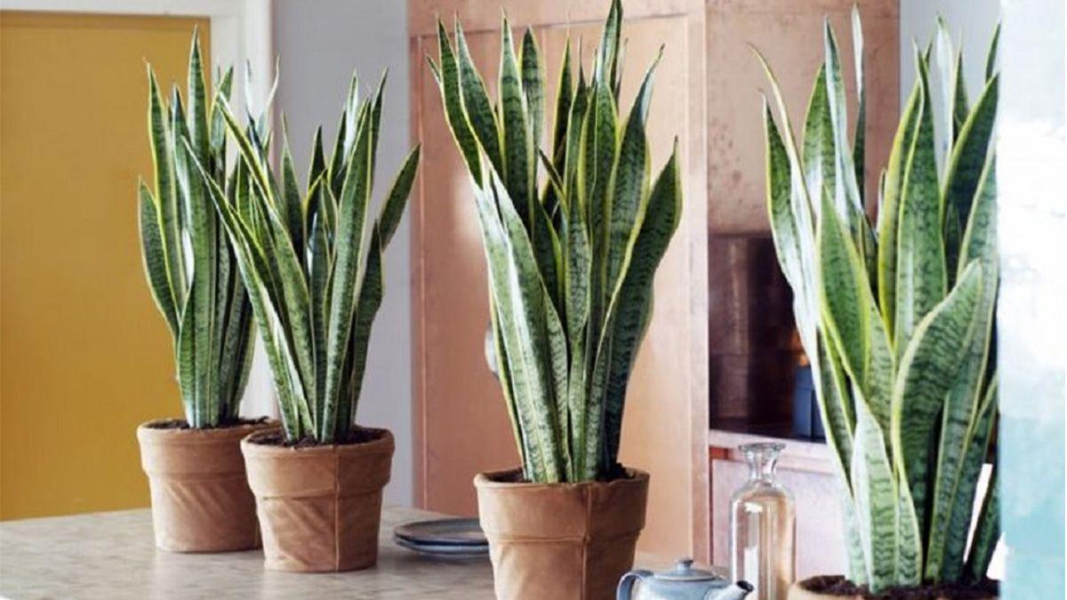 Cinco plantas para tener un microclima perfecto en casa
