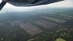 El 83% de los encuestados cree que los incendios de los bosques se producen intencionalmente y el 32% dijo que el objetivo es usar la tierra para cultivos de soja.