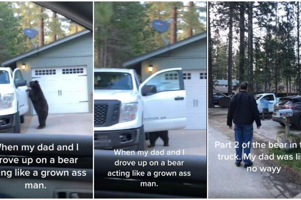 Un oso se metió dentro de una camioneta