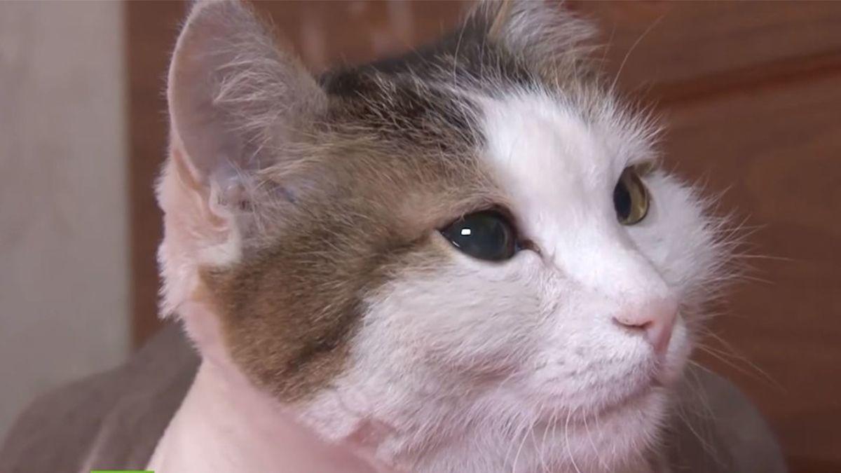 Video: así un gato salva a su dueña de morir en un incendio mientras dormía
