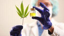 Este jueves fue publicado en el Boletín Oficial de la Nación el decreto reglamentario de la ley de cannabis medicinal, sancionada por el Congreso en el mes de marzo de 2017.