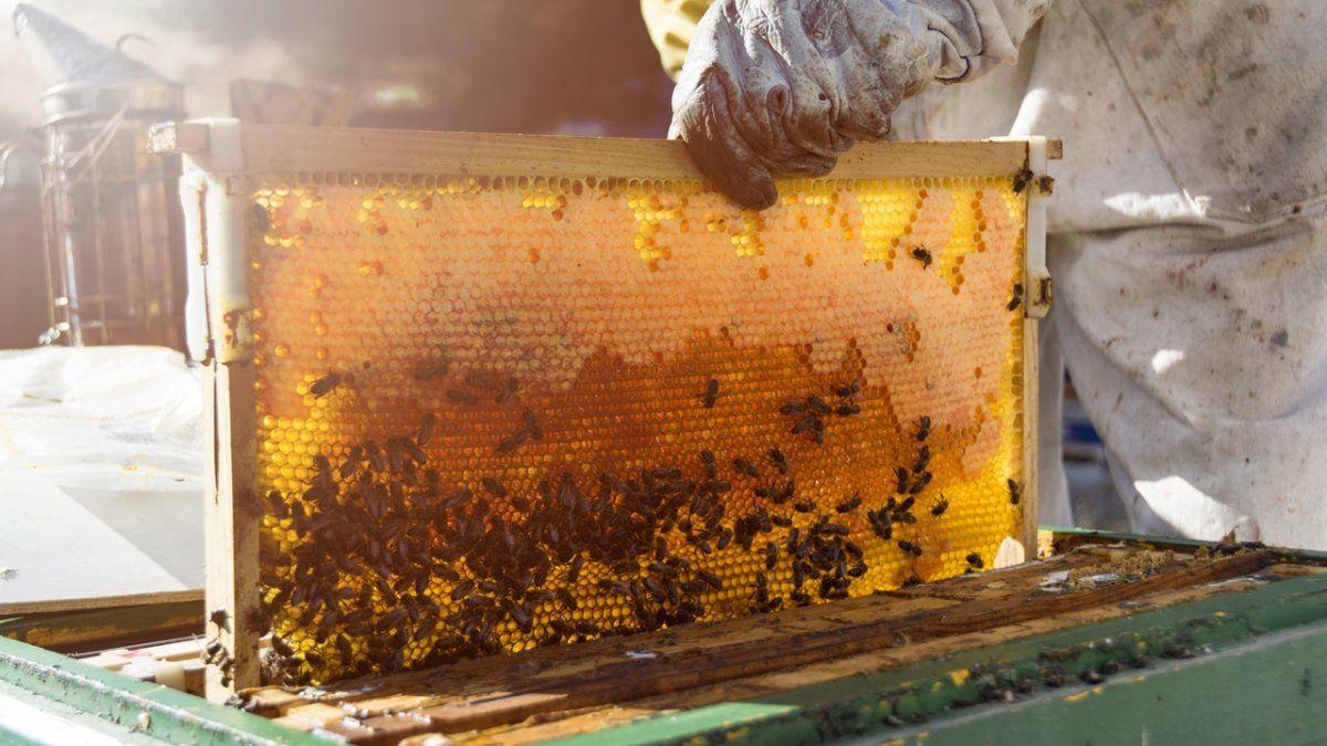 Argentina es uno de los mayores exportadores de abejas reina a nivel mundial.