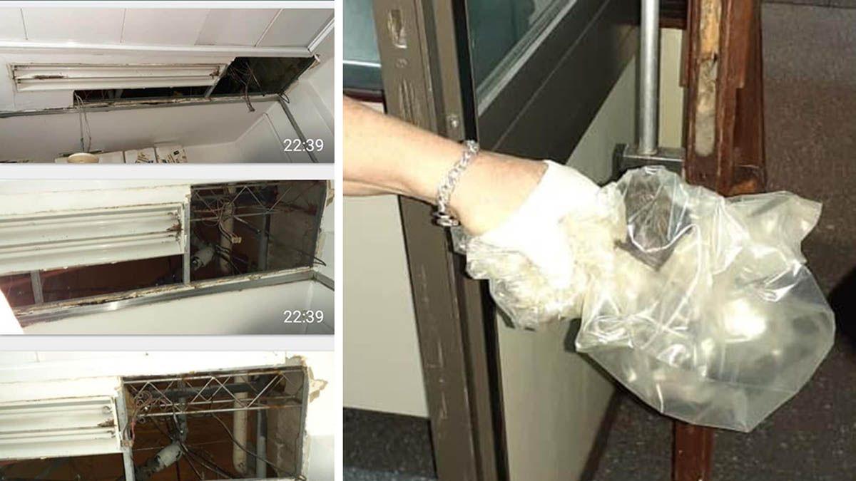 Las fotos que compartieron en Facebook las mamás sustitutas muestran roturas en el cielo raso y los muriciélagos que encontraron.