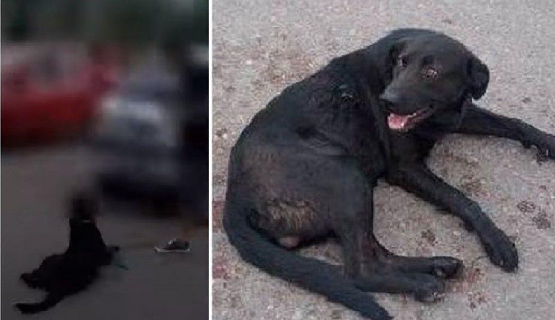 Imputaron a la docente que ató a su perro al auto y lo arrastró por la calle