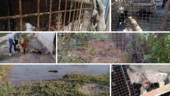Algunos de los animales que se encontraron durante el allanamiento al predio de tres hectáreas en la zona rural de Desvío Arijón, el pasado 13 de mayo.