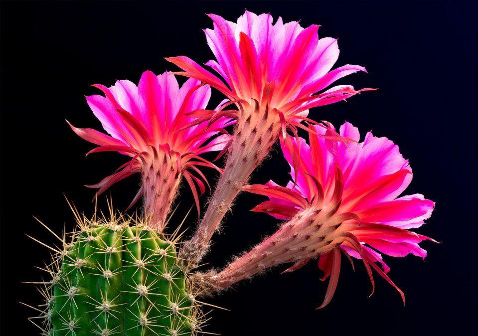 Cactus y suculentas