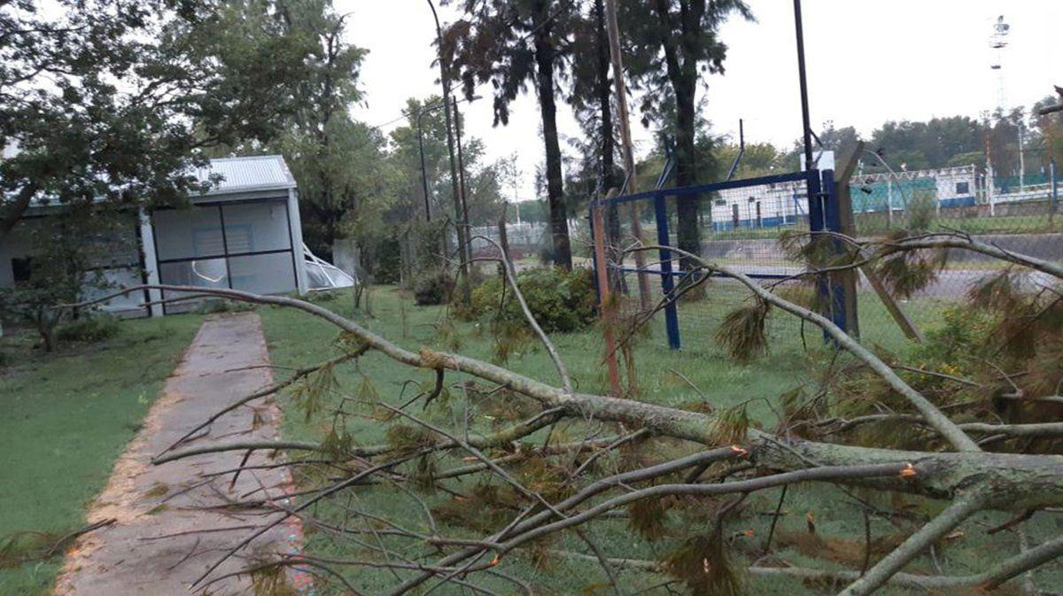 La tormenta dejó árboles y ramas caídas.