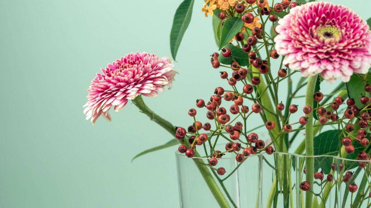 Seis plantas que atraen las energías positiva y la paz al hogar