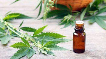Convocan una manifestación virtual para exigir el tratamiento del Autocultivo de cannabis terapéutico en el Senado