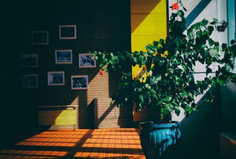 5 plantas de interior que necesitan poca iluminación