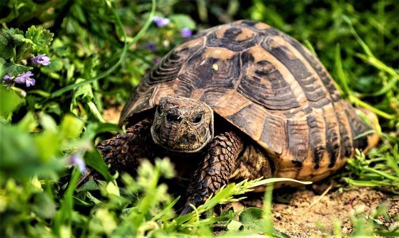 """Día Mundial de la Tortuga: """"mascotas"""" en hogares y en riesgo de extinción"""