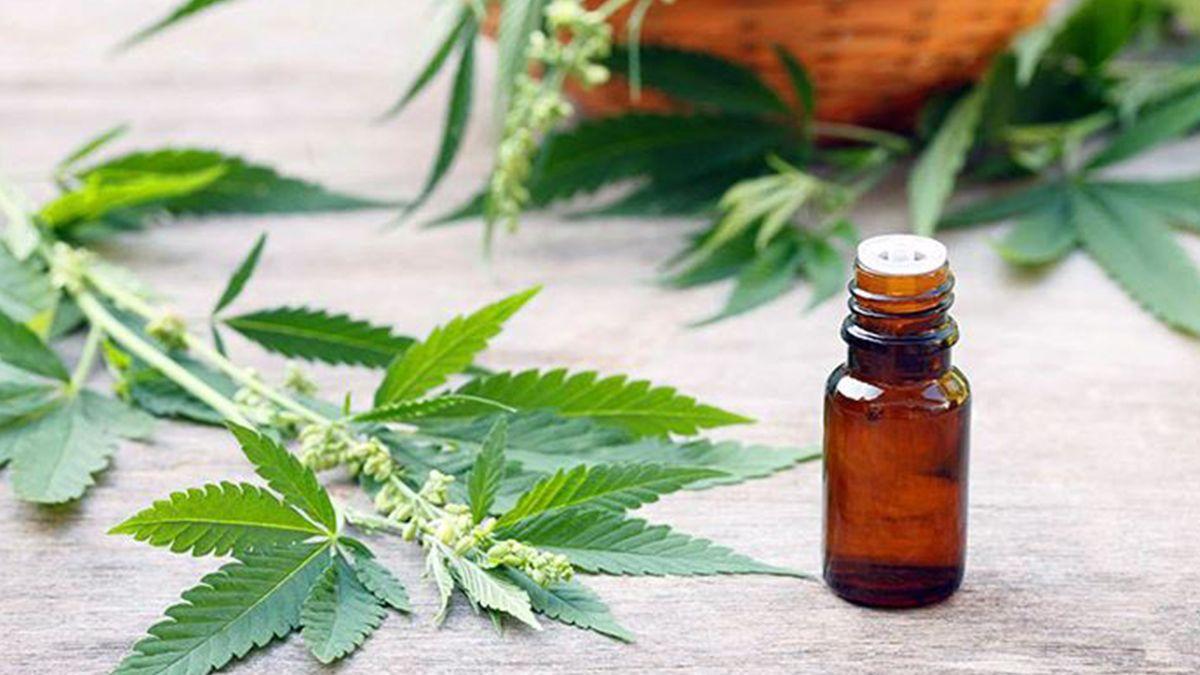 El aceite de cannabis poseeprincipios activos que son útiles para mejorar la calidad de vida de personas que pedecen distintas enfermedades