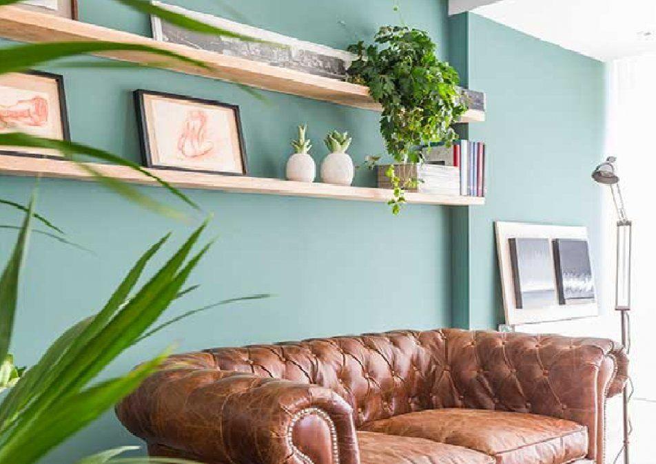Estantes con plantas en la pared